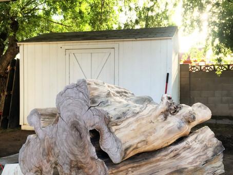Reclaiming Urban Wood in Arcadia