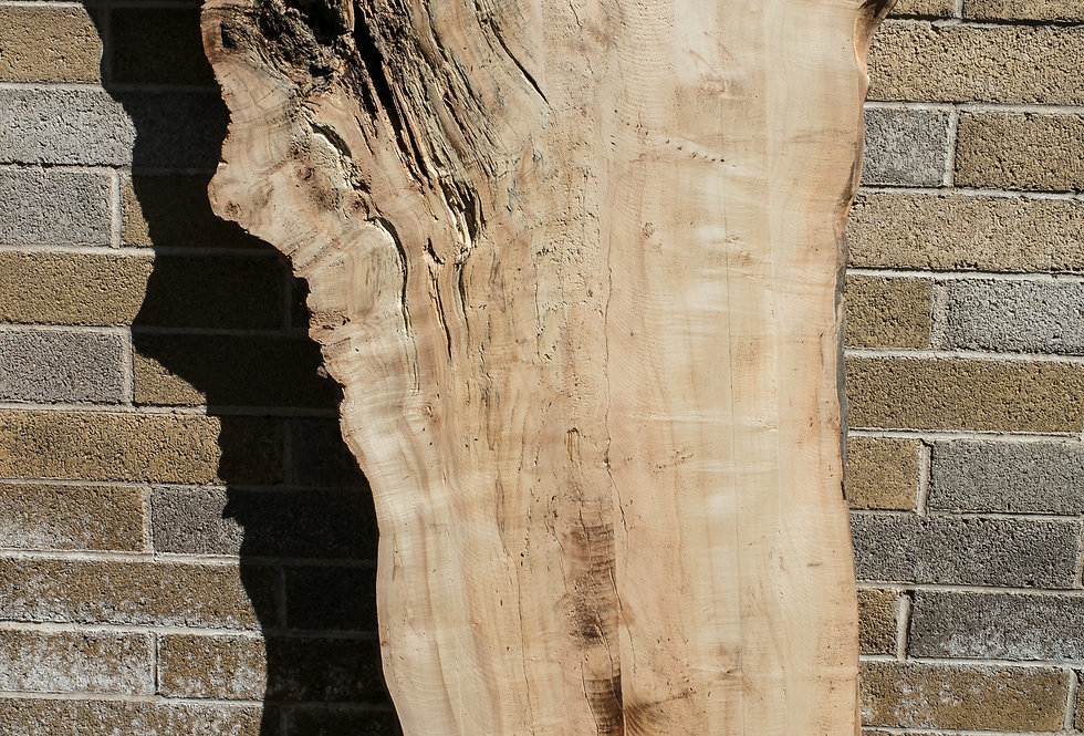 Rustic Knotty Silver Maple Live Edge slab for 6ft River Mirrors