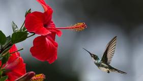Fun Family Activity-Attracting Hummingbirds