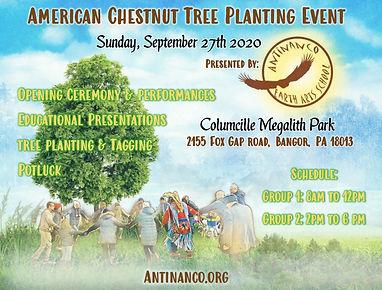 American Chestnut Flyer Columcille (2).j