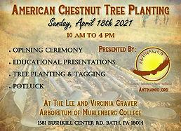 Graver Arboretum American Chestnut Plant