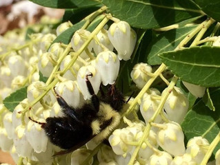Bee Action Pollinate