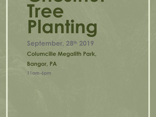 Bringing Back the American Chestnut Tree