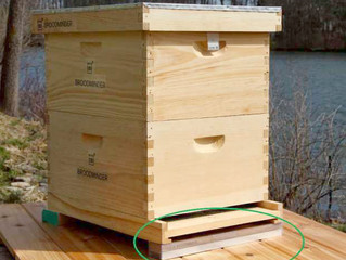 Antinanco Bee Action Pollinate Fundraiser's Mission Accomplished!