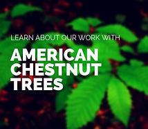 chestnuts_edited.jpg