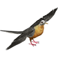 Passenger_Pigeon.png