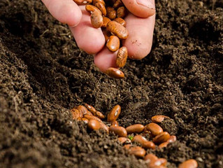 Seeds and Soil Nutrients