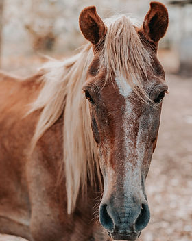 close-up-photo-of-brown-horse-1730760.jp