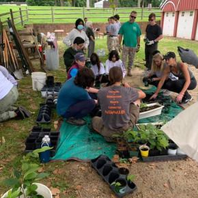 Native Food Forests Restoration