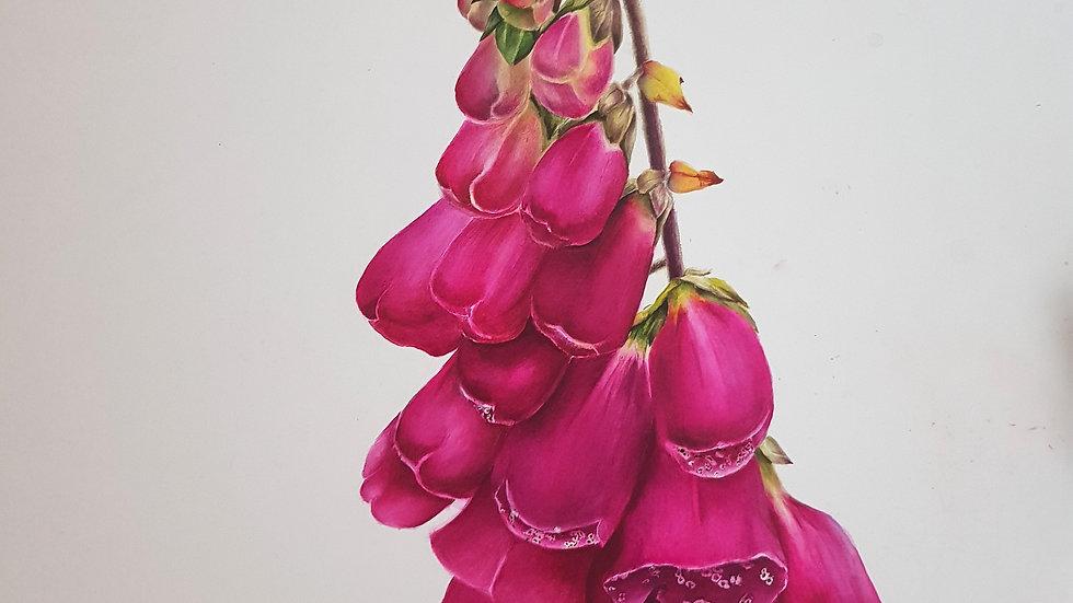 Kerry Foxgloves