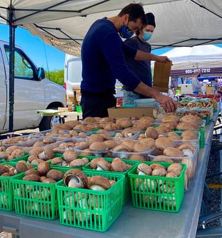 Fresh & Tasty Mushrooms (Mark).jpg