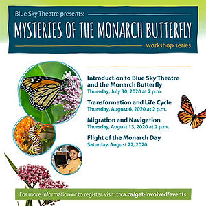 Mysteries of the Monarch Butterfly