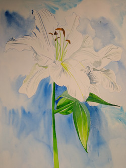 """White Lily"""