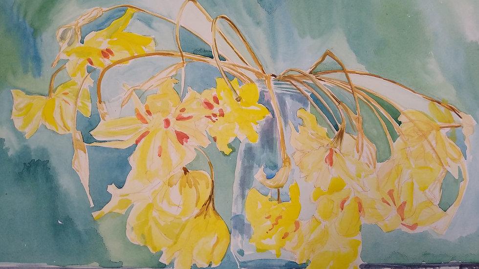 Sara's daffodils