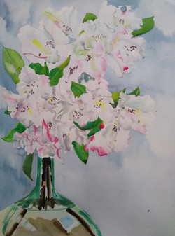 """""""White Rhododendron"""""""