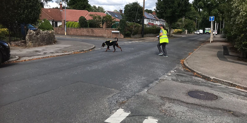 Mantrailing Training Cheltenham - urban