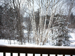 view from lodge 3 deck