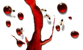 Ants #4