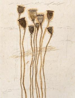 Plant Series 1