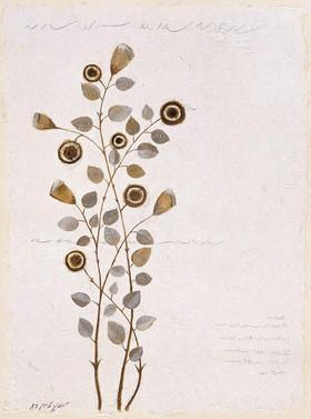 Plant Series 3