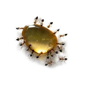 Ants #10