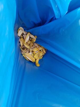Banana peels for composting.