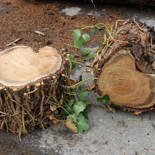 wood_perches.jpg