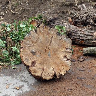 wood_trunk.jpg