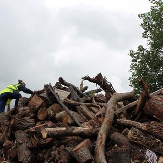 wood-pile_pd.jpg