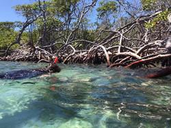 Snorkeling at Guiligan's Island
