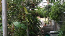 Sewanee Receives Tropical Plant Collection From Vanderbilt
