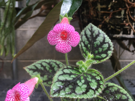 Tropical Plants Flowering in the Woods Lab Greenhouse