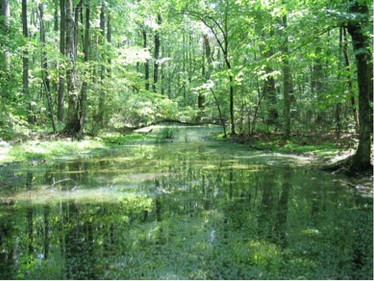 Evans Interviewed in Chattimes Article about EPA Rollback of Wetlands Protection in the U.S.
