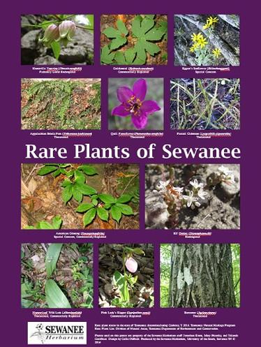 Rare Plants of Sewanee Poster