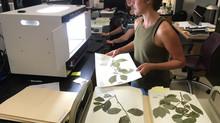 Sewanee Herbarium Collection Scanned!