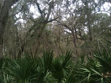 Botanical Notes from Dr Evans' Coastal Ecology Program on Sapelo Island