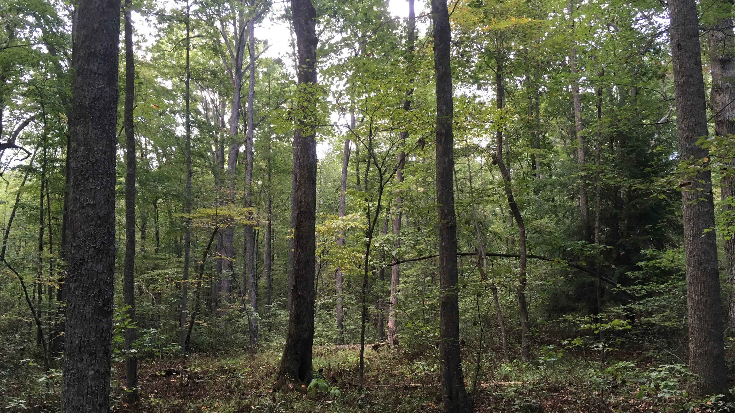 Forest plot in Cane Creek Watershed
