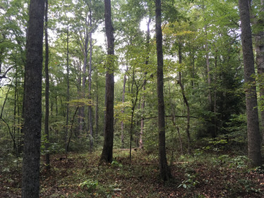 Lab Team Re-Inventories Long-Term Forest Plots at Fall Creek Falls State Park