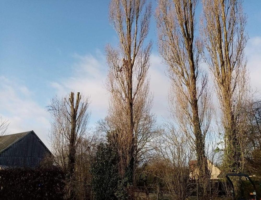 Abattage d'arbre à Sées dans l'Orne en Normandie