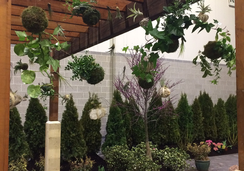 Pergola of Air Plants & Kokadama Moss Balls