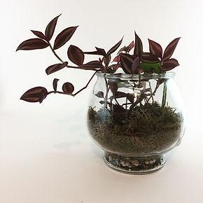 Plant Terrarium Plant Art in PVD