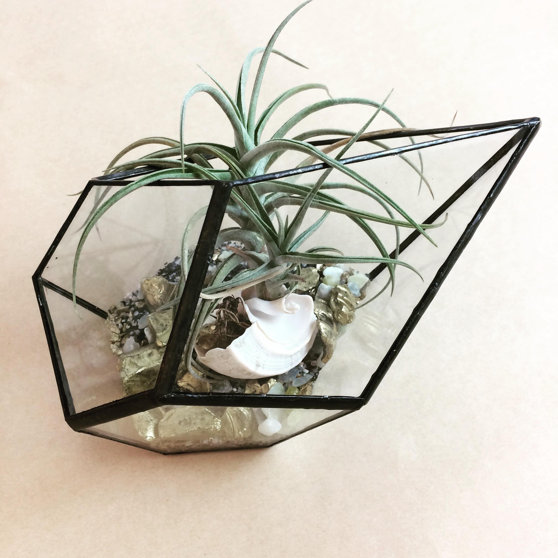 DIY Glass Terrarium Workshop