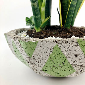 Concrete Pot & Plant