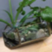 Houseplant Terrarium
