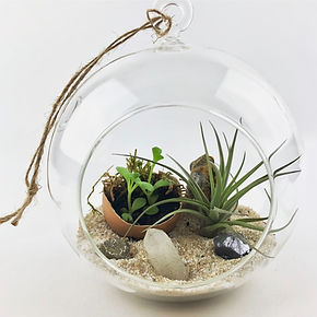 AirPlant Terrariums - 5 of 5.jpg