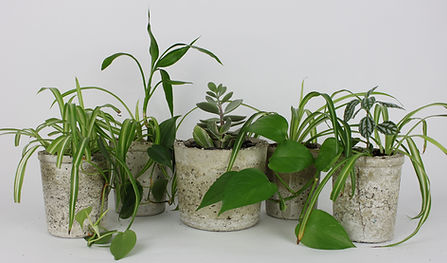 Potted Plant Containers
