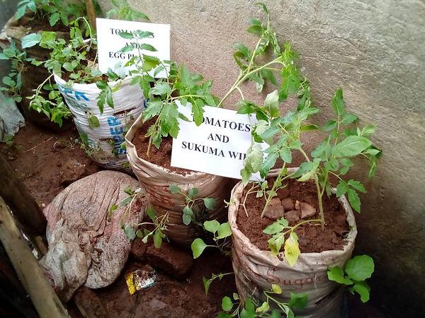 Uganda Sack Farming visit (1).jpeg