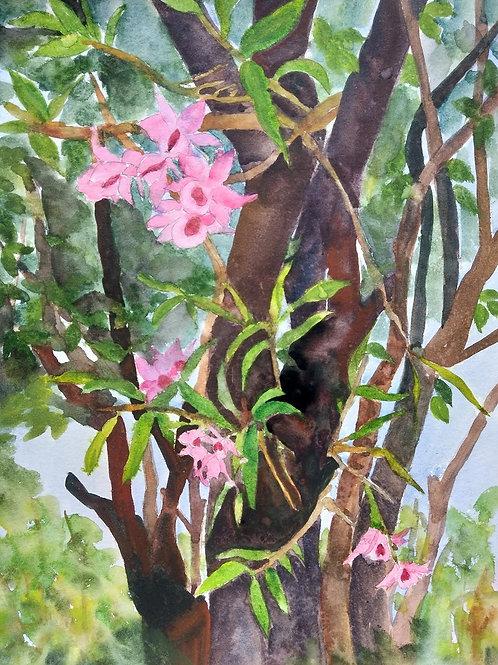 "Série Entorno - ""Orquídea III"" - Artista Zilda Felisbino"