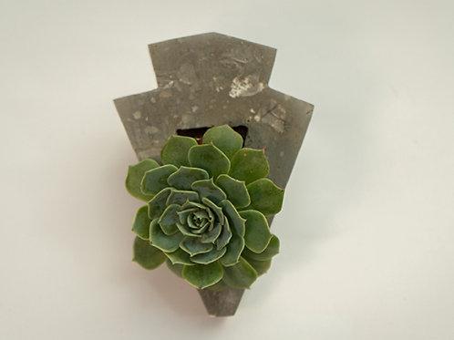 "Mini vaso para suculentas ""Petit Pinhão"" - Designer Diego Bachmann"