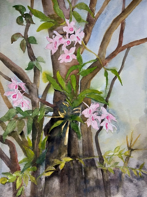 "Série Entorno - ""Orquídea II"" - Artista Zilda Felisbino"